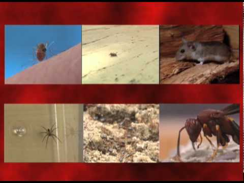 Dangerous Pests In Your House - Orkin Pest Control