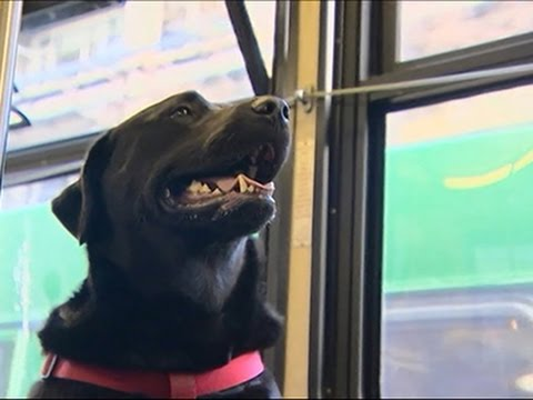 Dog Rides Bus Alone, Wins Hearts