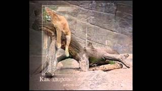 картинки приколы с животными