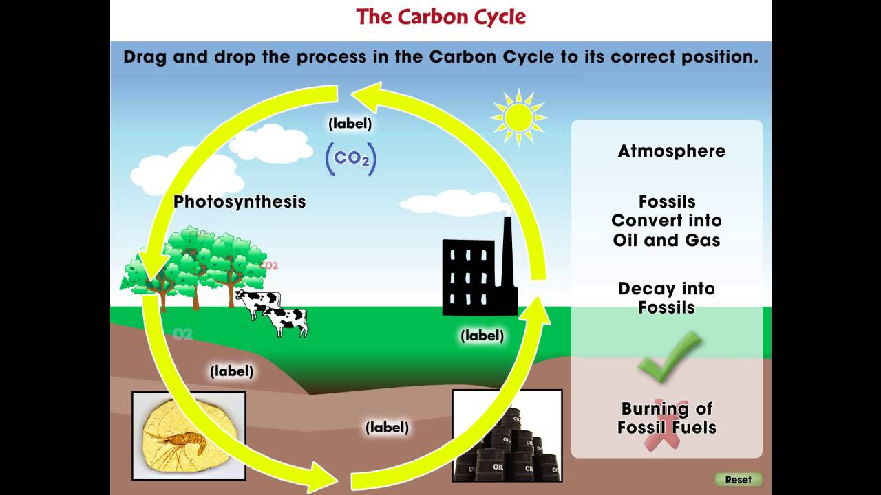 CC7747 Global Warming CAUSES: The Carbon Cycle Mini - YouTube
