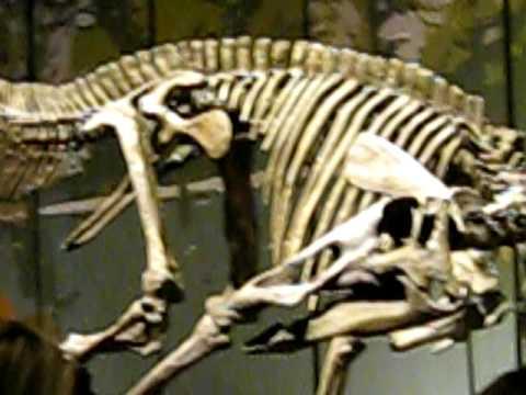 Tellus Museum: Fossil Gallery Dinosaur Displays Part one