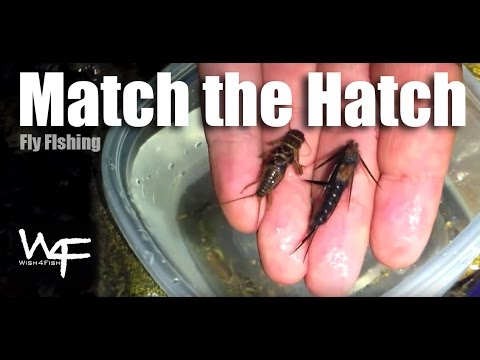 "W4F - Top Tip - ""Match the Hatch"" Fly Fishing Tips"