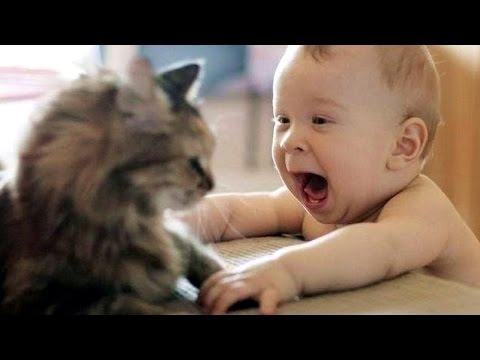 Cat Playing with Baby – Best of Cute Cats Love Babies Compilation
