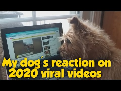MY DOG'S  REACTION ON 2020 VIRAL VIDEOS