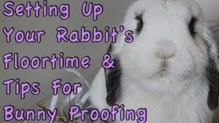 Budgetbunny: How To Set Up Your Rabbit's Floortime & Bunny Proofing