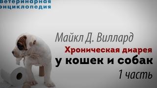 Хроническая диарея у кошек и собак.  1 часть