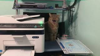 Sony the cat in office