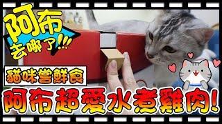 【Bonnie】阿布在哪裡?! - 貓咪的新玩具│阿布的水煮雞肉嘗鮮時間 ! 寵物店抽獎一不小心抽中大獎啦 ! !