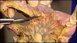 Анатомия человека для новичков