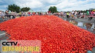 [国际财经报道]番茄大战 俄罗斯圣彼得堡惊现红色海洋| CCTV财经