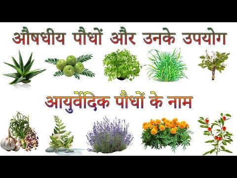 औषधीय पौधों और उनके उपयोग | Ayurvedic Plants Information In Hindi | आयुर्वेदिक पौधों के नाम