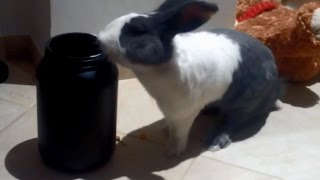 Bunny Loves Eating Food !!