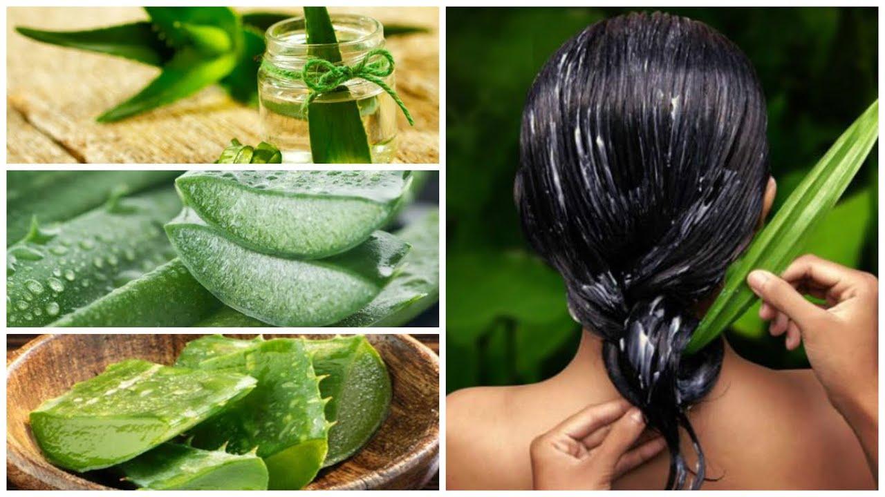 tratamientos caseros para la caida del cabello con sabila