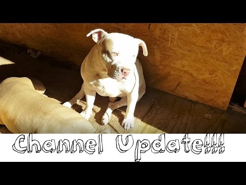 2 Pitbulls Channel Update!!!