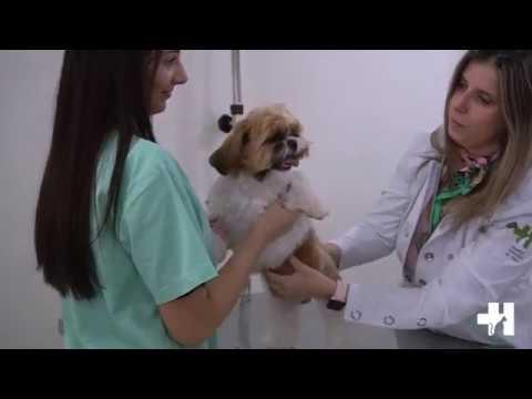 Dr Hato é Hospital Veterinário e Pet Shop