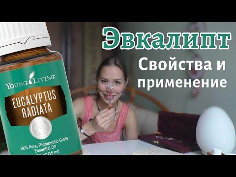 Эвкалипт, свойства и применение эфирного масла эвкалипта