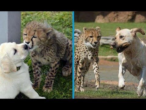 SECRETS of Zoos
