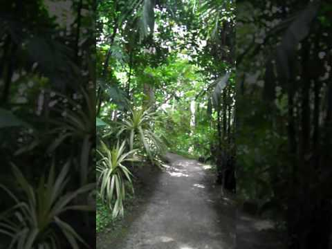 Birds singing at Flower Forest, Barbados March 2016