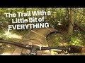 Mountain Biking Percy Warner Park - Nashville Tennessee