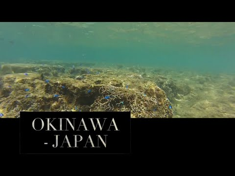 #TAMW Video Post Card - Okinawa Japan