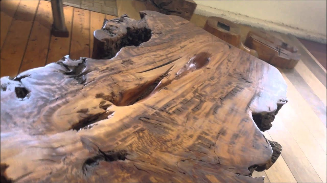 eucalyptus tree root table - a4506 - eucalyptop - amplez - youtube