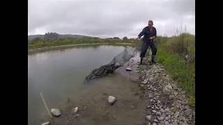 Setting & Retrieving an Eel net, Fyke Net, or Hoop Net. Masterton, New Zealand
