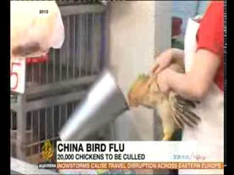 China goes on high H7N9 bird flu alert