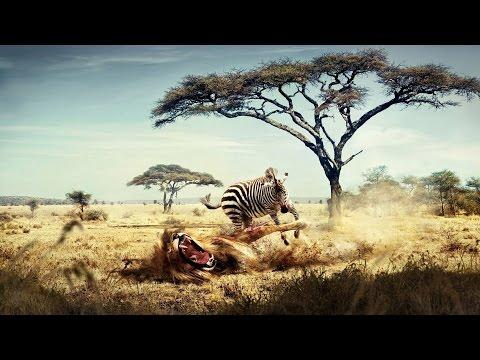 National Geographic Documentary   -   African Wildlife   - Nat Geo wild