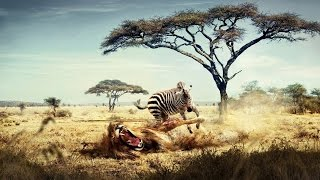 National Geographic Documentary   -   African Wildlife   - Nat Geo wild