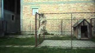 Siberian Husky Puppy Escape