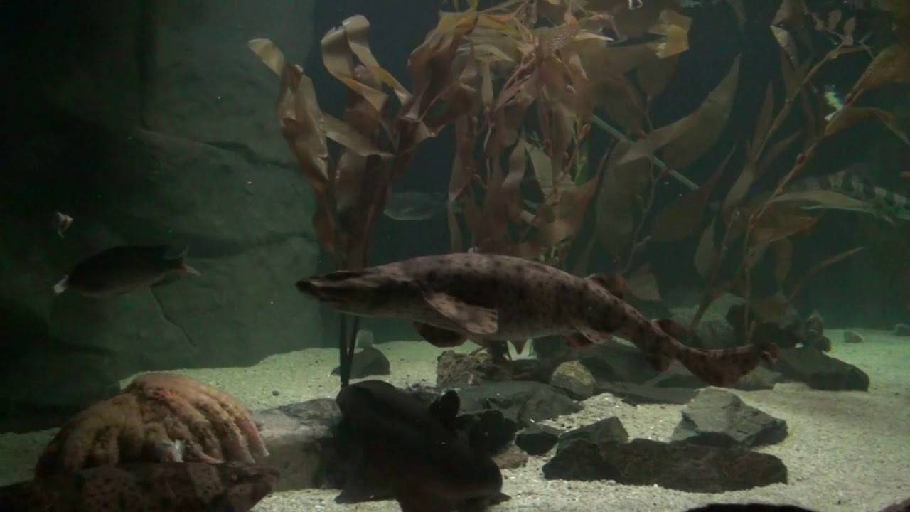 Washington DC Animals and Sea Creatures The National ...