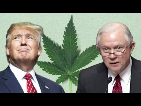 Trump Can't Stop Marijuana Legalization (But He Can Slow it Down)