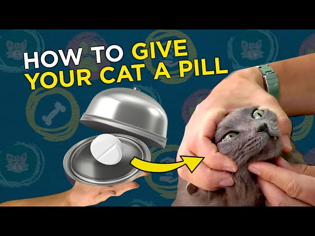 How To Give Your Cat A Pill - VetVid Episode 020
