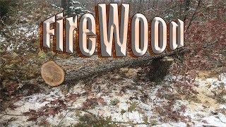 Fresh cut oak wood splitting