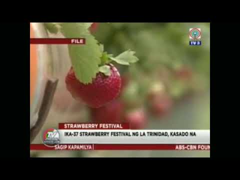 La Trinidad Strawberry Festival 2018 Press Conference