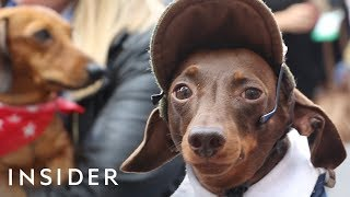 Hundreds Of Dachshunds Joined A 'Sausage Walk' In London