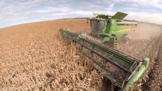 Sorghum Harvest 2015