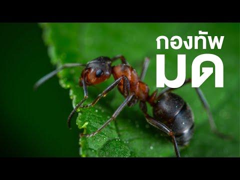 สารคดีที่น่าสนใจ: The Amazing World of Ants