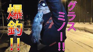 【釣り】増毛でグラスミノー爆釣!!