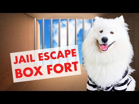 Dog Escapes the Box Fort Prison: Ultimate BoxFort Challenge