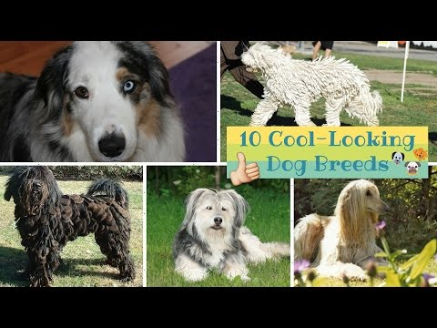 Top 10 Cool-Looking Dog Breeds