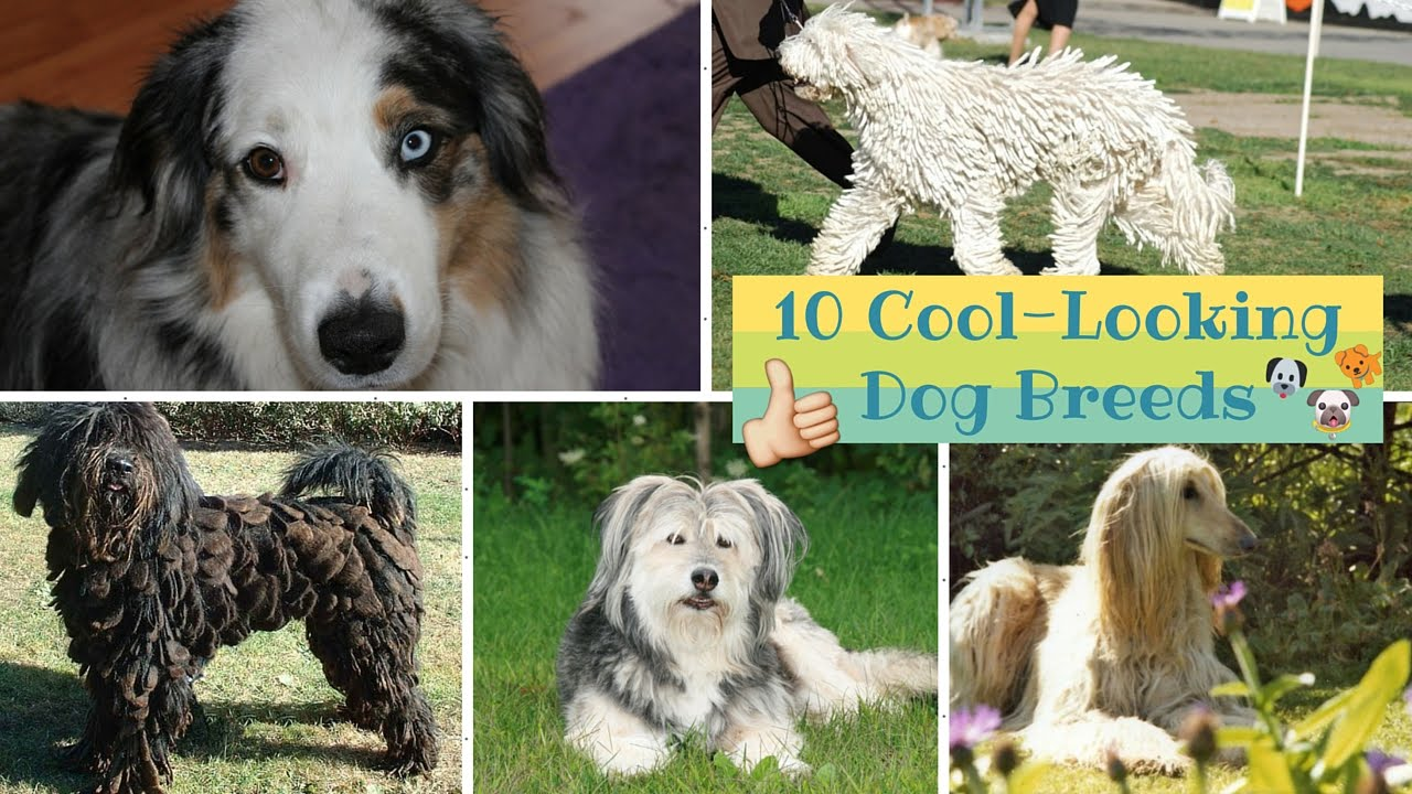 Top 10 Cool-Looking Dog Breeds - YouTube