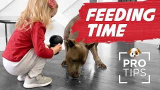 Feeding Time: 10 Fun Ways to Feed Your Dog for Improving Behavior