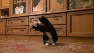 Говорящая кошка и мыльные пузыри(, 2013-01-27T09:30:46.000Z)
