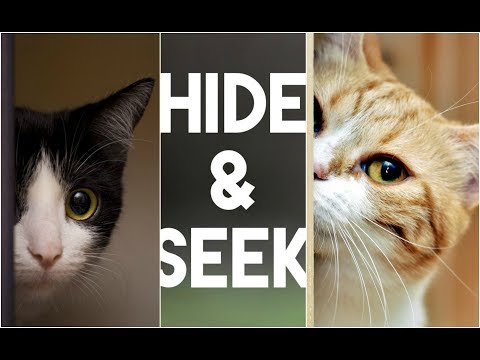 cute kittens playing hide seek play time 2 funny cats kittens