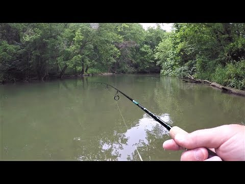 Creek Fishing for ANYTHING That Will Bite (surprise catch!)