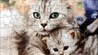 Cat And Kitten Puzzle Game Animals Jigsaw Rompecabeza