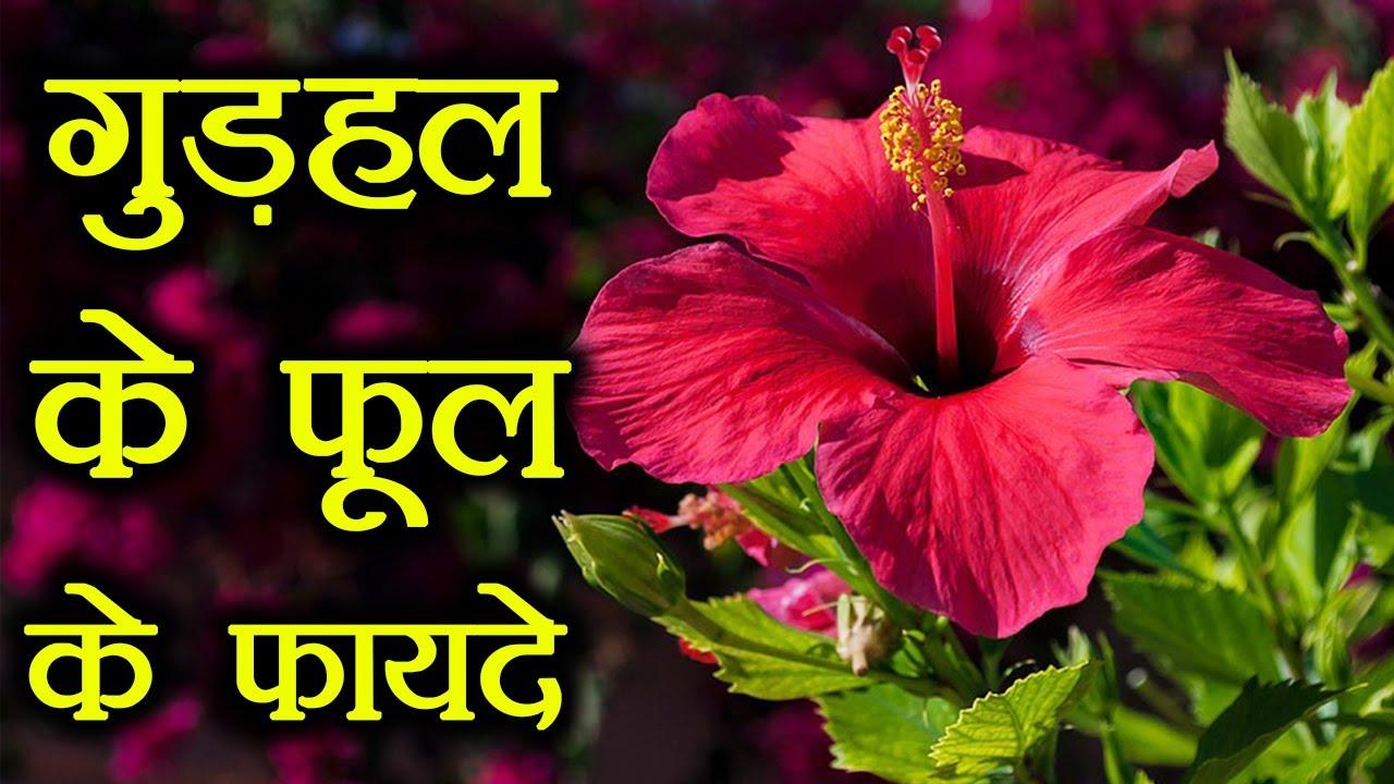 Hibiscus Flower Benefits