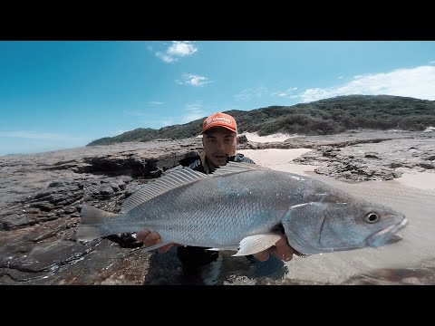 Catching KOB On DROPSHOT! - A Good Days FISHING!