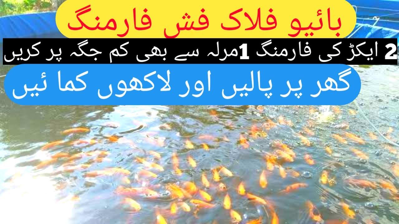 How to start Biofloc Fish Farming in Pakistan ...